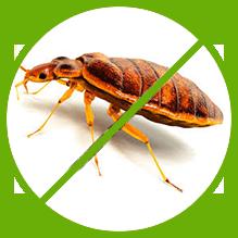 Bed Bug Control Melbourne