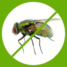 Flies Control Melbourne