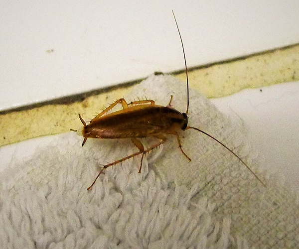 cockroach-control-services-melbourne