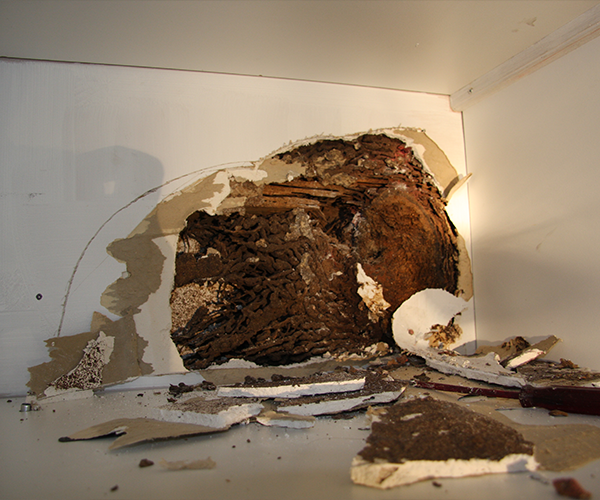 termite-control-services-in-melbourne